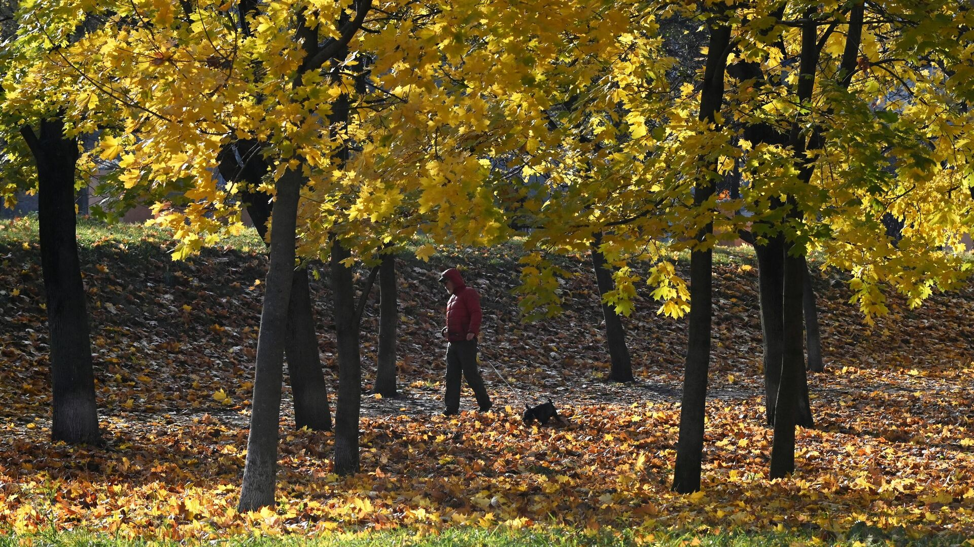 Осень в Москве2