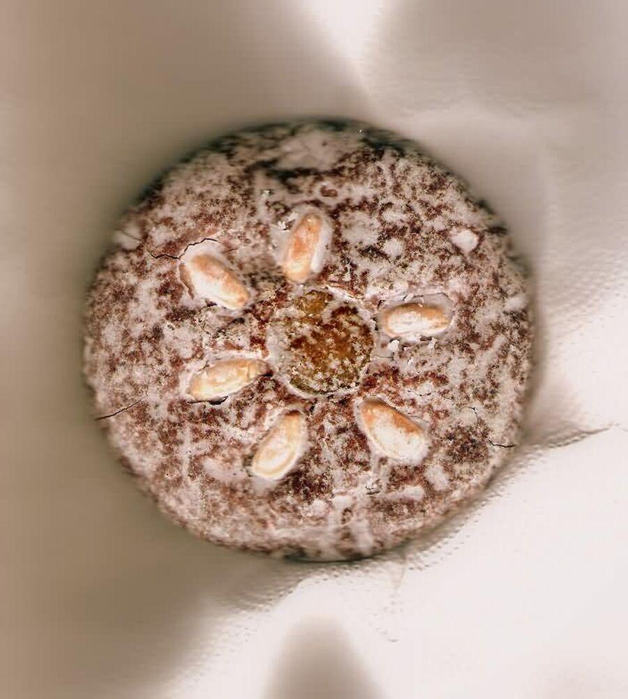 Печенье Лебкюхен