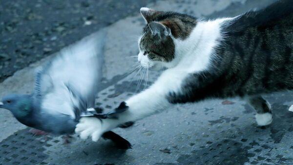 Кот Ларри британского премьер-министра поймал голубя на глазах журналистов
