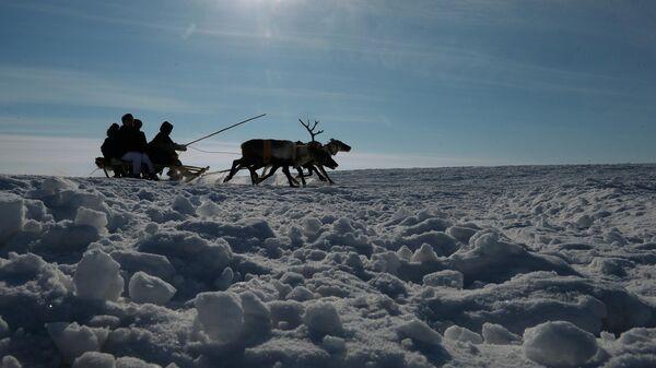 Оленеводы в Ненецком автономном округе