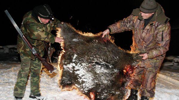 Охотники осматривают шкуру убитого кабана после загонной охоты