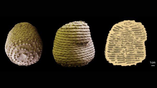 Гнезда африканских термитов Apicotermes lamani - сооружения из глины, напоминающие по форме керамические изделия