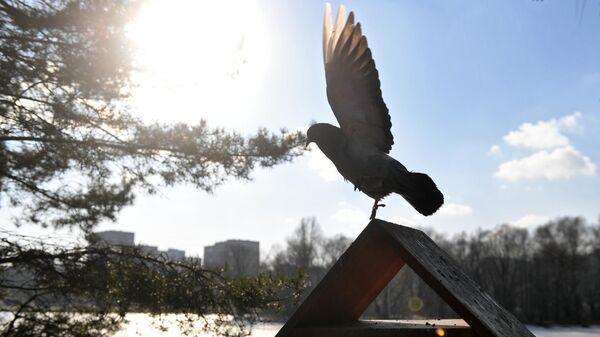Голубь на кормушке для птиц в парке Дружбы в Москве