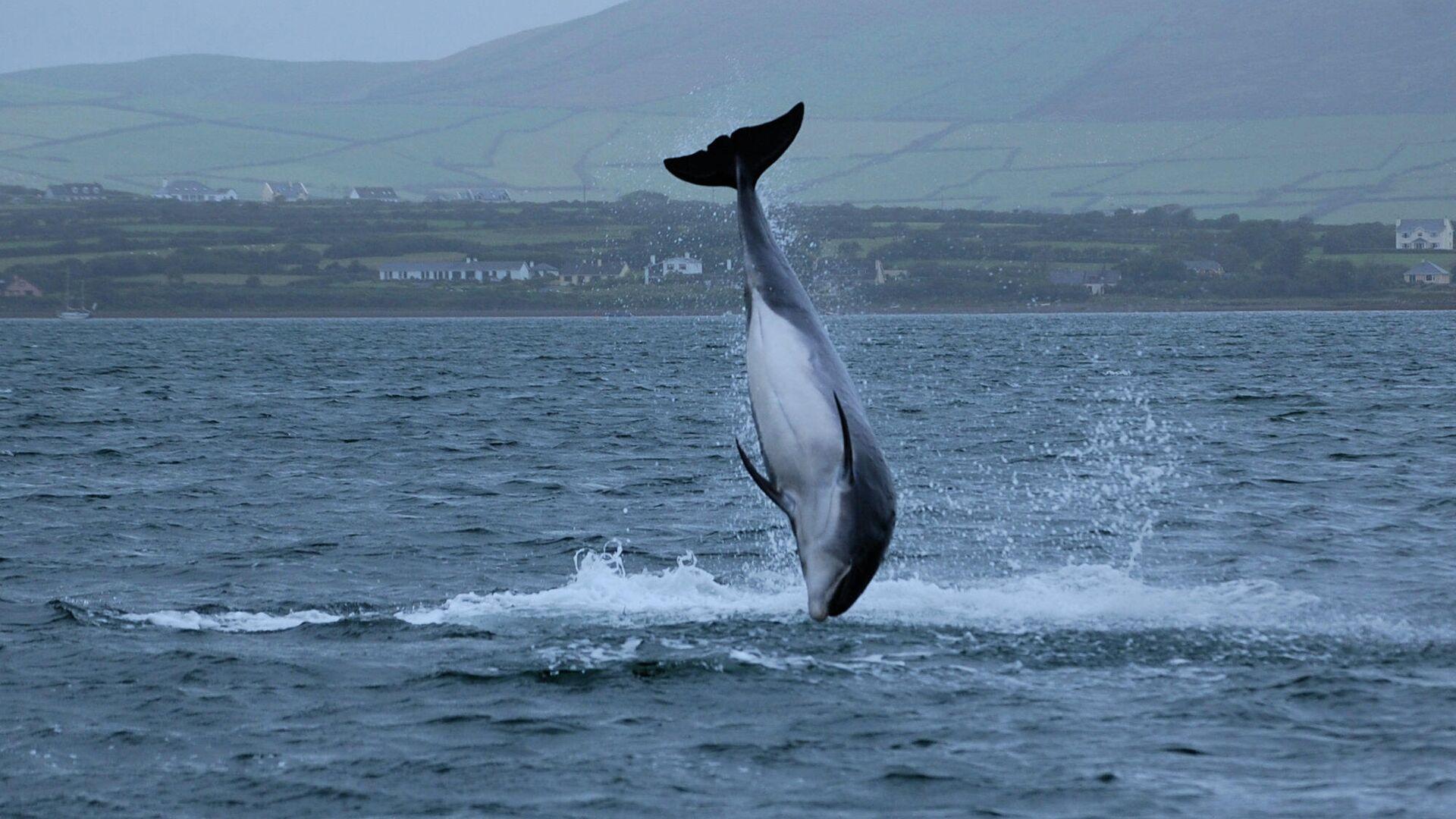 "Ирландский политик заявил о пропаже знаменитого дельфина ""из-за Путина"" -  РИА Новости, 26.01.2021"