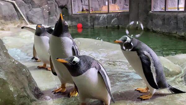 Пингвины в Московском зоопарке. Кадр видео