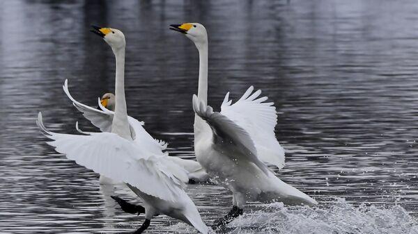 В Дагестане зафиксировали массовую гибель диких птиц