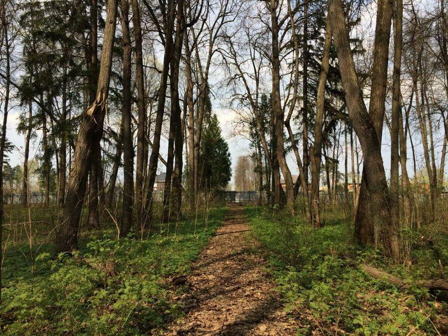Усадебный парк Опалиха-Алексеевское