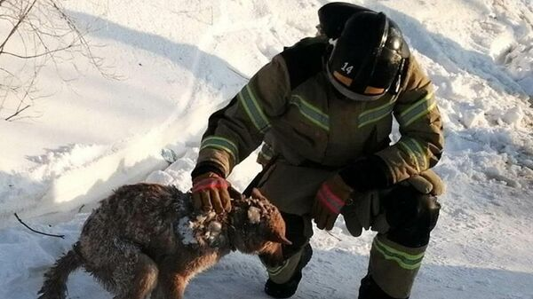 Спасатели в Лабытнанги (ЯНАО) спустя два дня после пожара в жилом доме нашли собаку под завалам