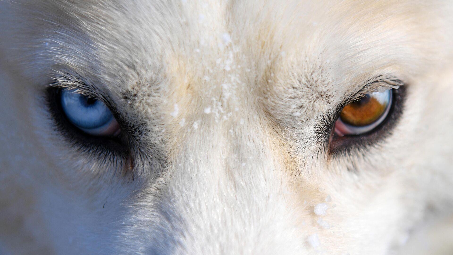 В Саратове проверят сообщение о нападении стаи собак на девочку
