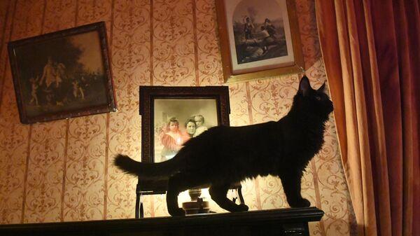 Новый кот Бегемот в нехорошей квартире под номером 50 музея Михаила Булгакова на Большой Садовой улице, дом 10 в Москве
