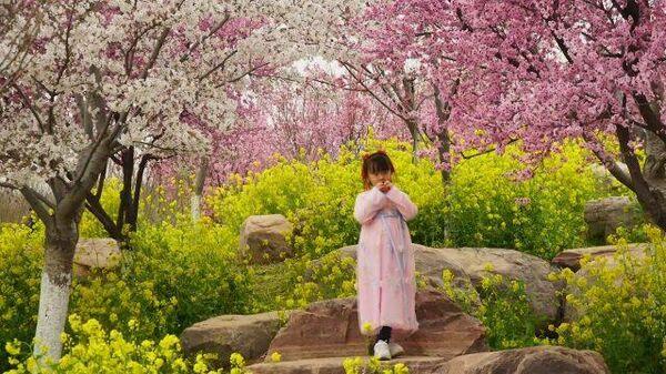 Райский сад: в Китае зацвела сакура