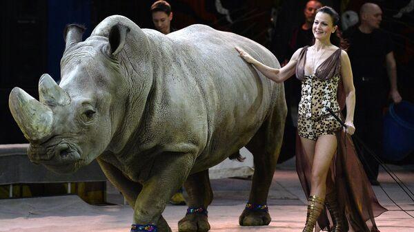 Дрессировщица во время выступления в Новогодней программе Цирка больших зверей в Сокольниках.
