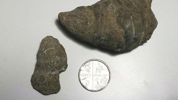 Шестилетий мальчик нашел во дворе своего дома в британском городе Уолсолл окаменелость, возраст которой составляет 251-500 миллионов лет