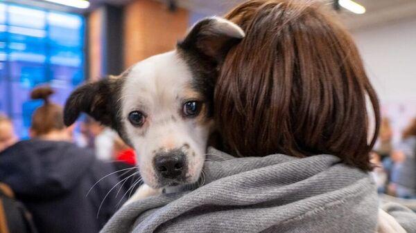 Собака на плече у хозяйки