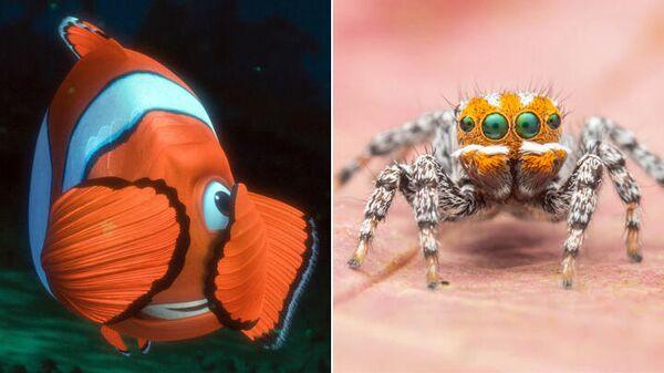 Рыба-клоун из мультфильма В поисках Немо и паук Maratus nemo