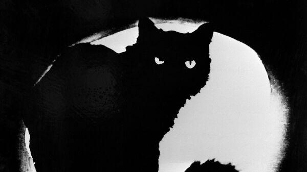 Репродукция фотографии Черный кот