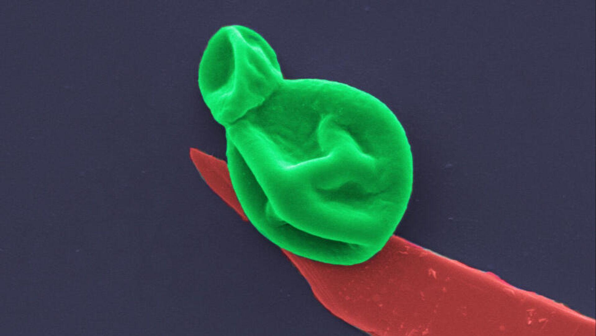Разработано покрытие, уничтожающее супербактерии и грибковые инфекции