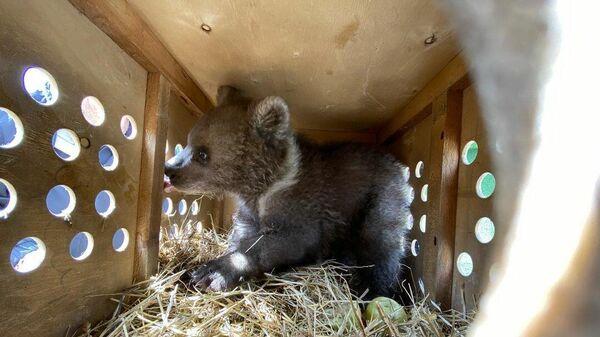 Медвежонок Умка во время транспортировки в Хабаровск
