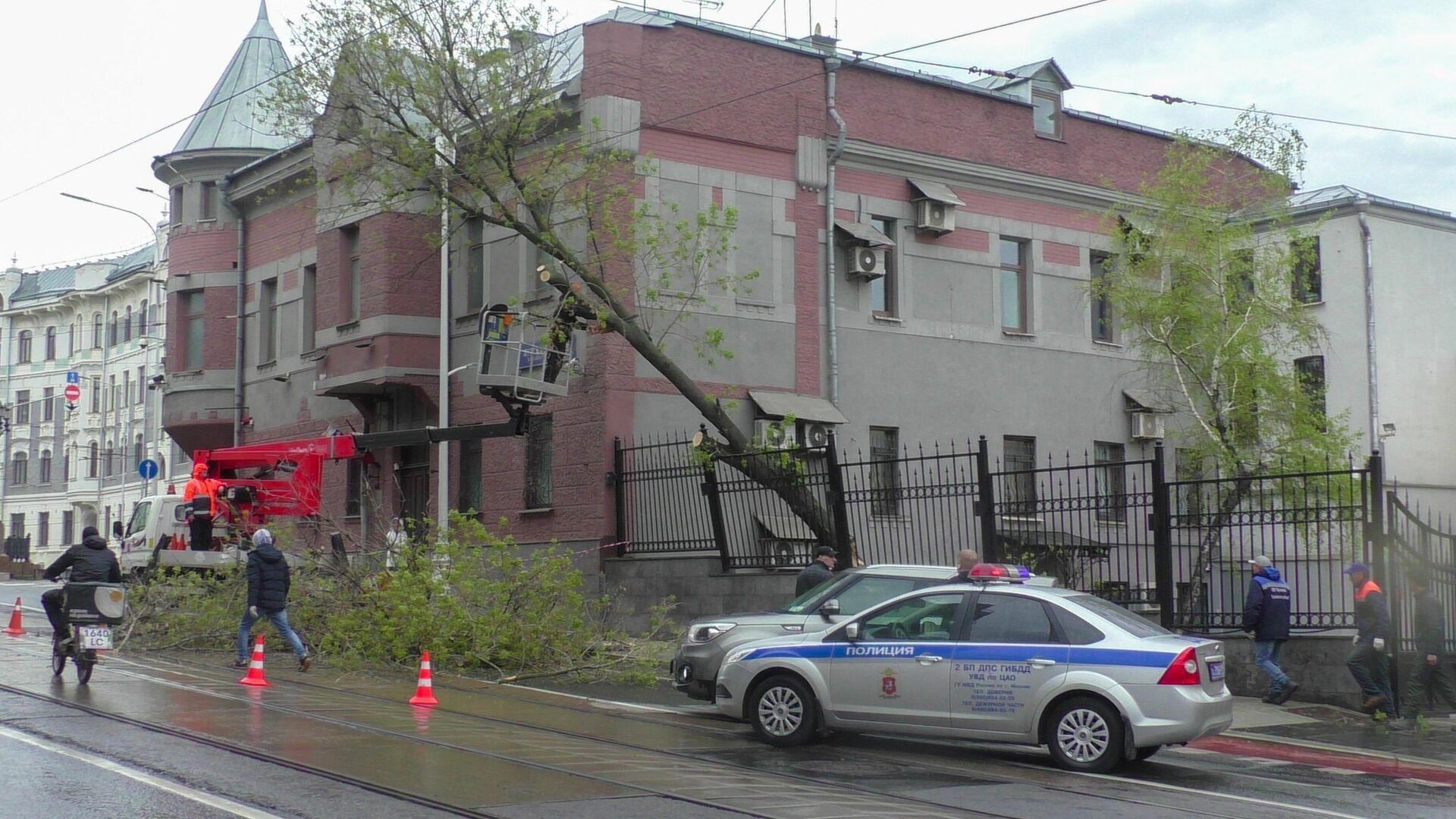 Аварийные службы устраняют последствия упавшего дерева на проезжую часть на Яузском бульваре - РИА Новости, 1920, 12.05.2021