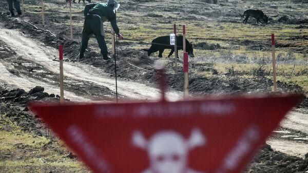 Специалисты Национального агентства по очистке от мин территорий Азербайджана (ANAMA) со служебными собаками на месте разминирования