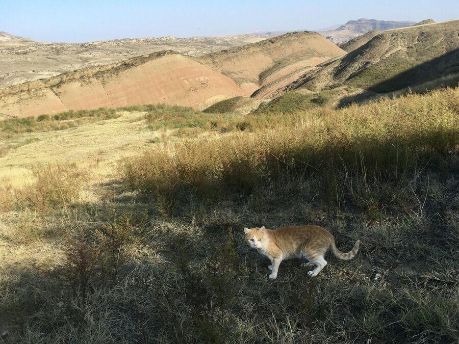 Гареджийская пустыня
