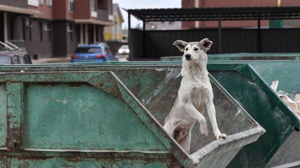 Бездомная собака в мусорном контейнере
