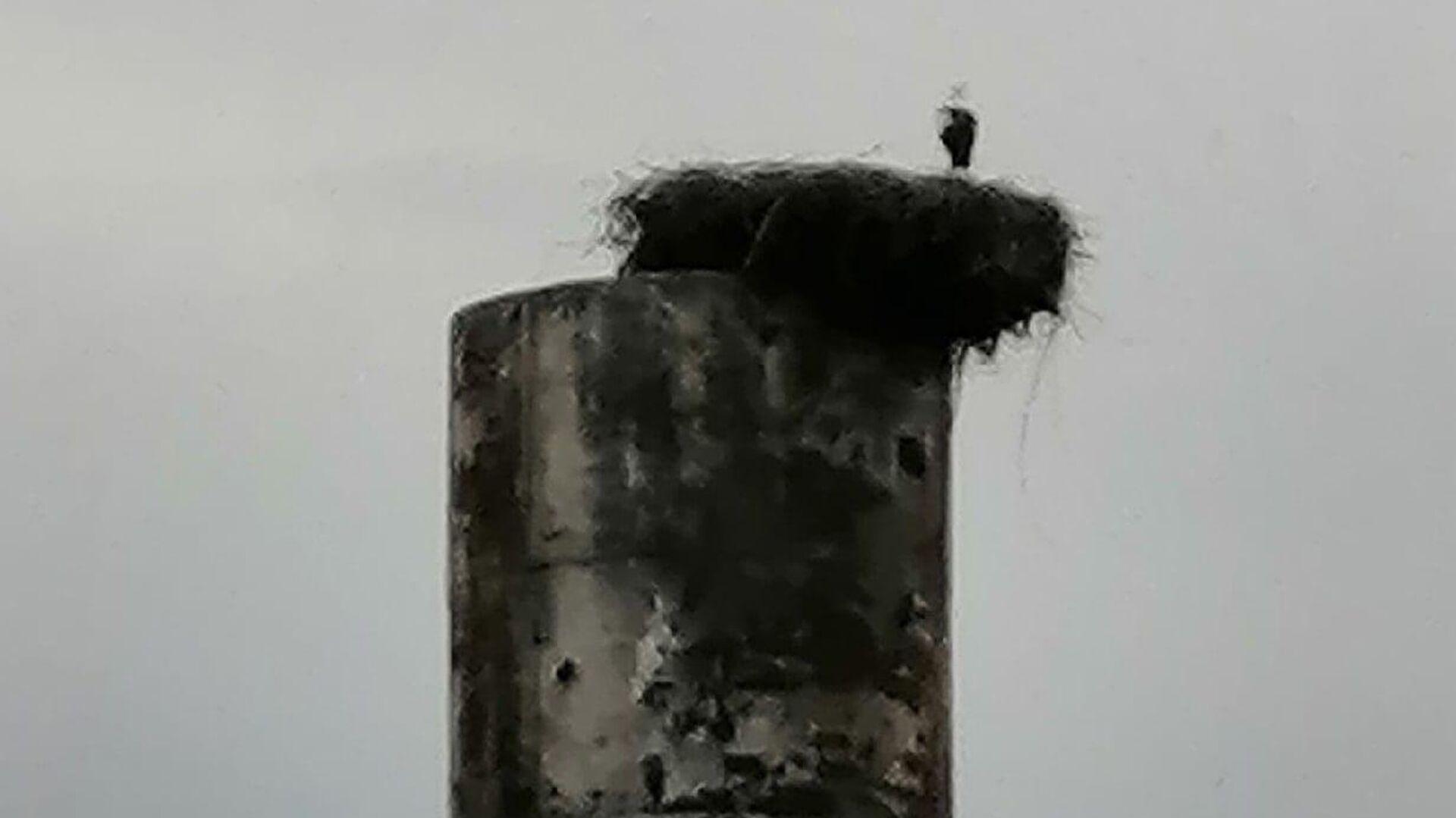 Под Калининградом снесли водонапорную башню вместе с гнездом аиста