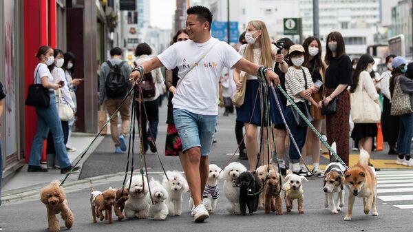 Специалист по выгулу собак переводит их через дорогу в Токио