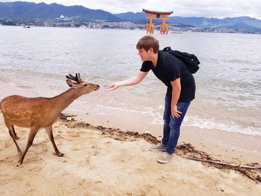 Олени острова Нара, Япония