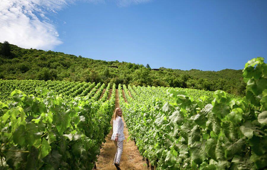 Винодельня в Чили