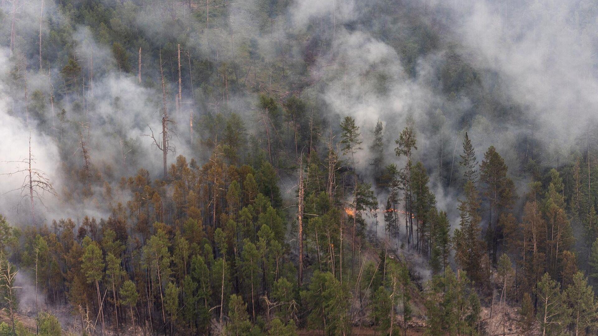 В подмосковных Луховицах локализовали ландшафтный пожар