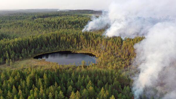 Горящие леса в районе Сямозера в Пряжинском районе Карелии