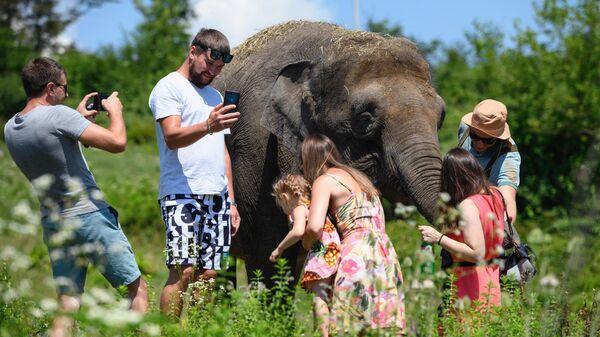 Слониха Марго в парке-санатории для реабилитации цирковых слонов в селе Ахштырь Адлерского района