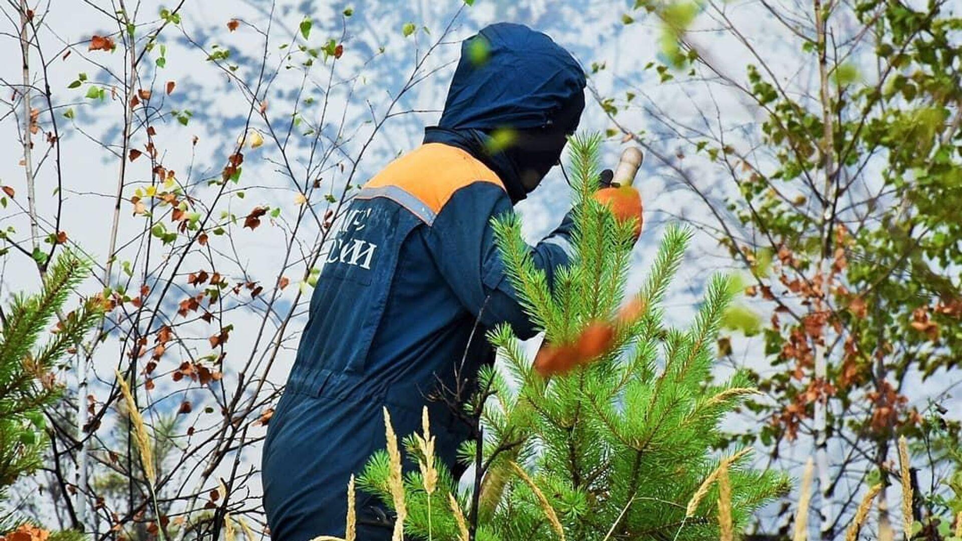 В Мордовии ввели режим ЧС из-за пожара в заповеднике