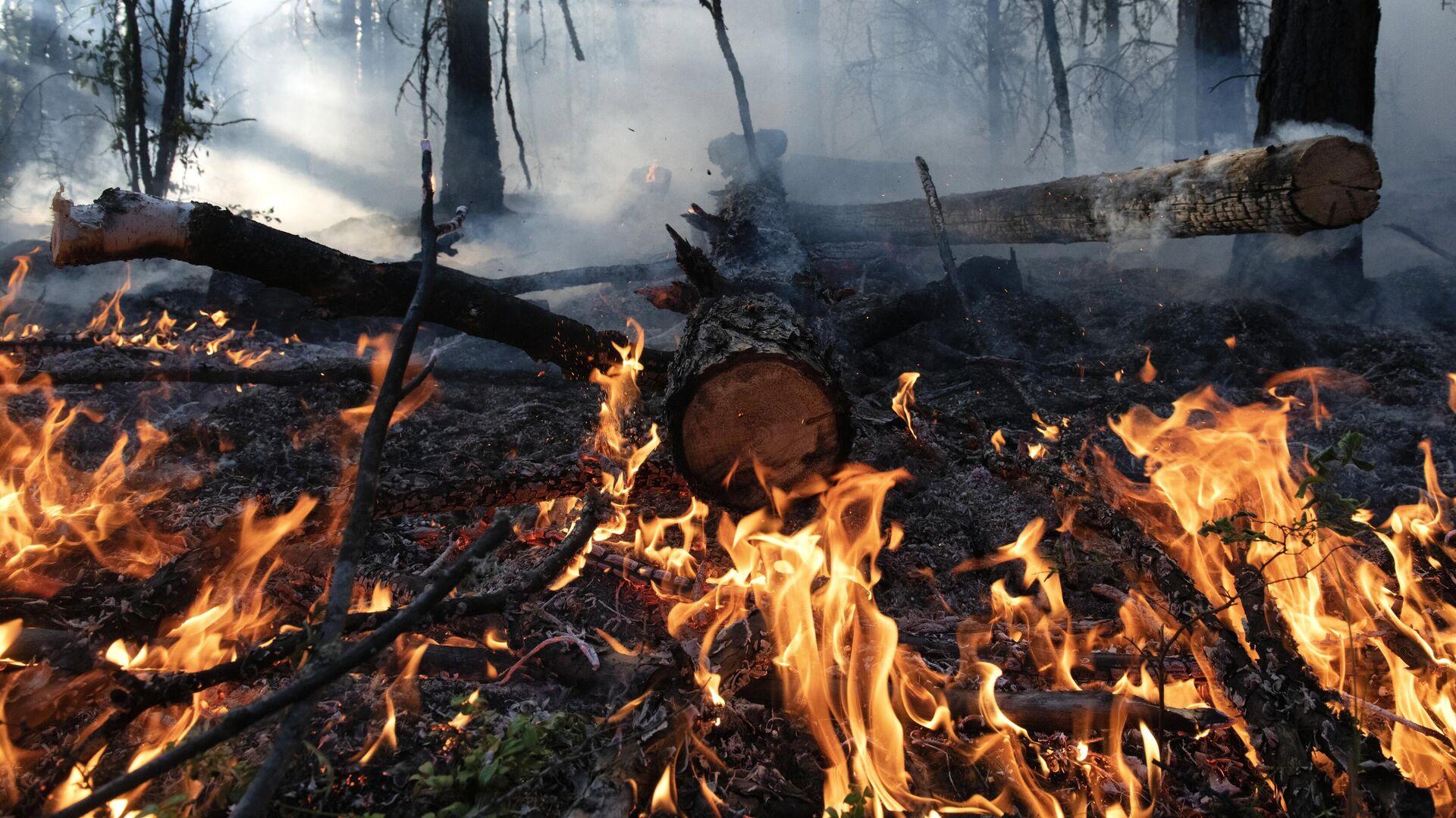 МЧС оценило площадь двух очагов пожаров в Мордовии и Нижегородской области