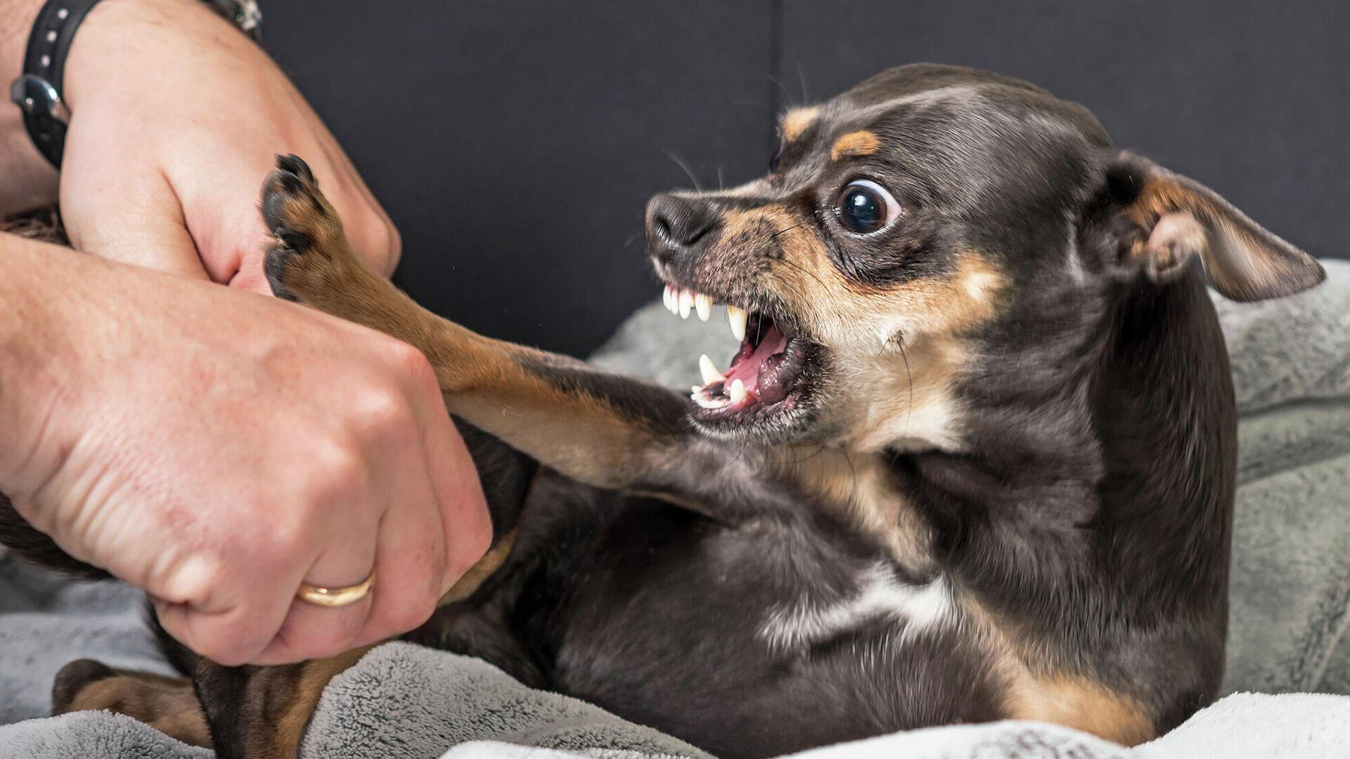 Собака бывает кусачей. От чего зависит характер лучшего друга человека