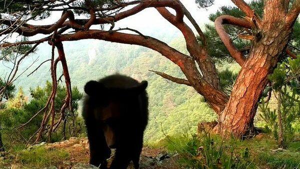 Медвежонок перевернул фотоловушку