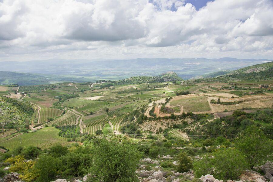 Виноградники в Галилее