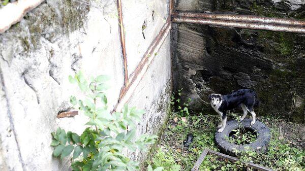 Собака, просидевшая трое суток в четырехметровой яме