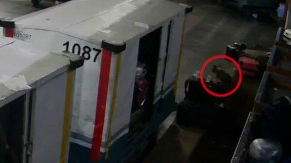 Собака сбежала из багажного отделения в Домодедово