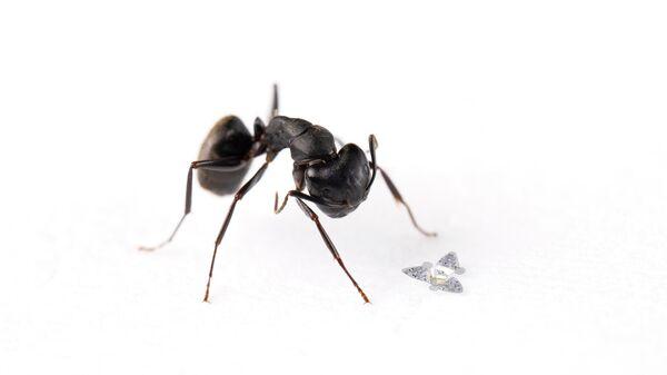 Ученые создали переносимые воздухом летающие микрочипы