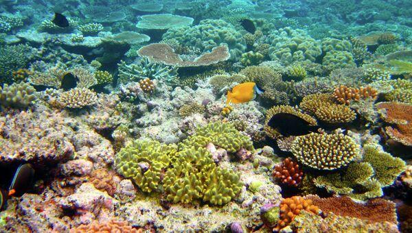Заливные коралловые луга