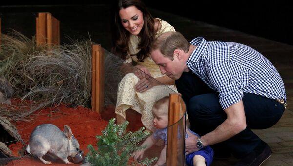 Принц Уильям и Герцогиня Кембриджская Кэтрин вместе с сыном наблюдают за билби в зоопарке Сиднея, Австралия