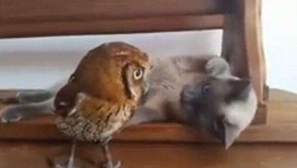 Видео в YouTube: кошка играет с совой