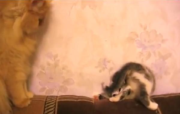 Котенок зарылся в диван, или Как красиво уйти