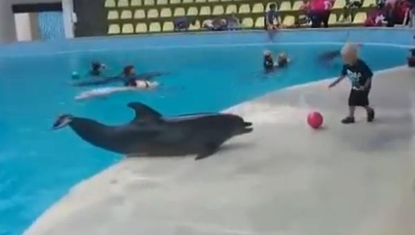 Вместе веселее:  дельфин поиграл с малышом в мяч