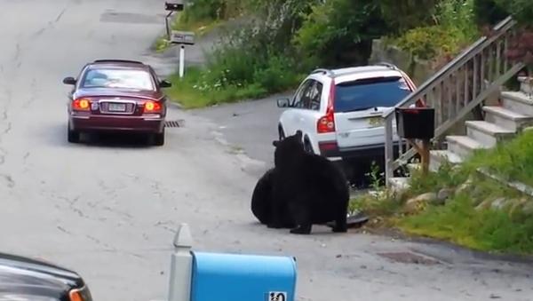 Медведи устроили борьбу посреди улицы