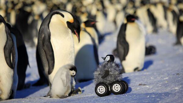 Замаскированная камера для работы с императорскими пингвинами в Антарктиде