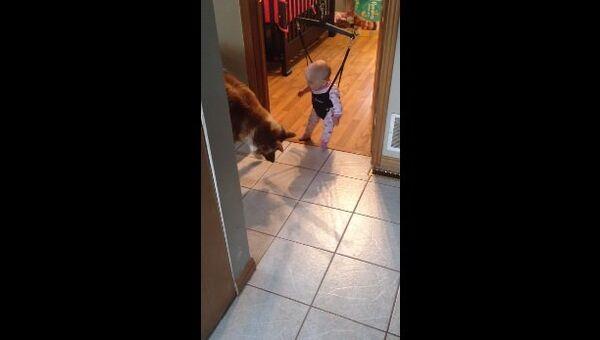 Лучший учитель для ребенка, или собака-попрыгун