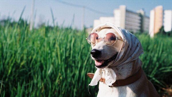 Жизнерадостная собачка из Тайланда, 17 января 2015. Архивное фото